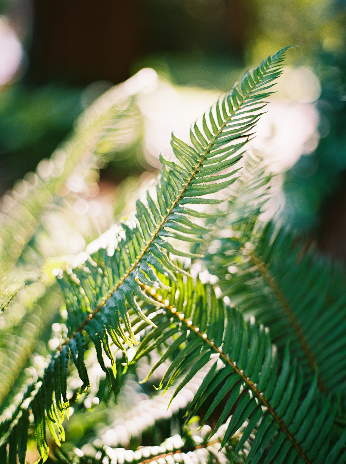 Forest details at Kiana Lodge by Seattle wedding photographer Anna Peters