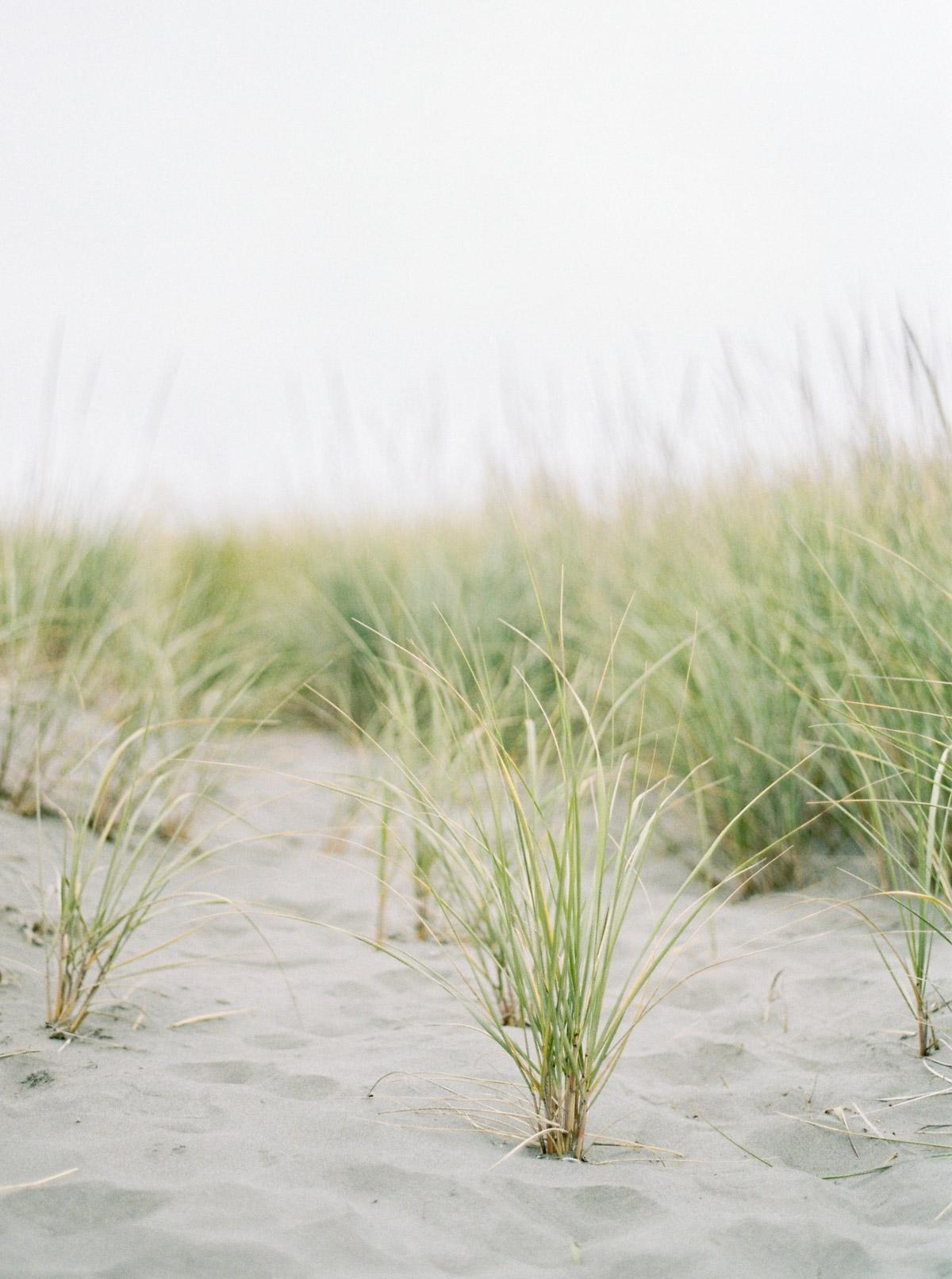 Photograph of Sea grass on a washington coast beach