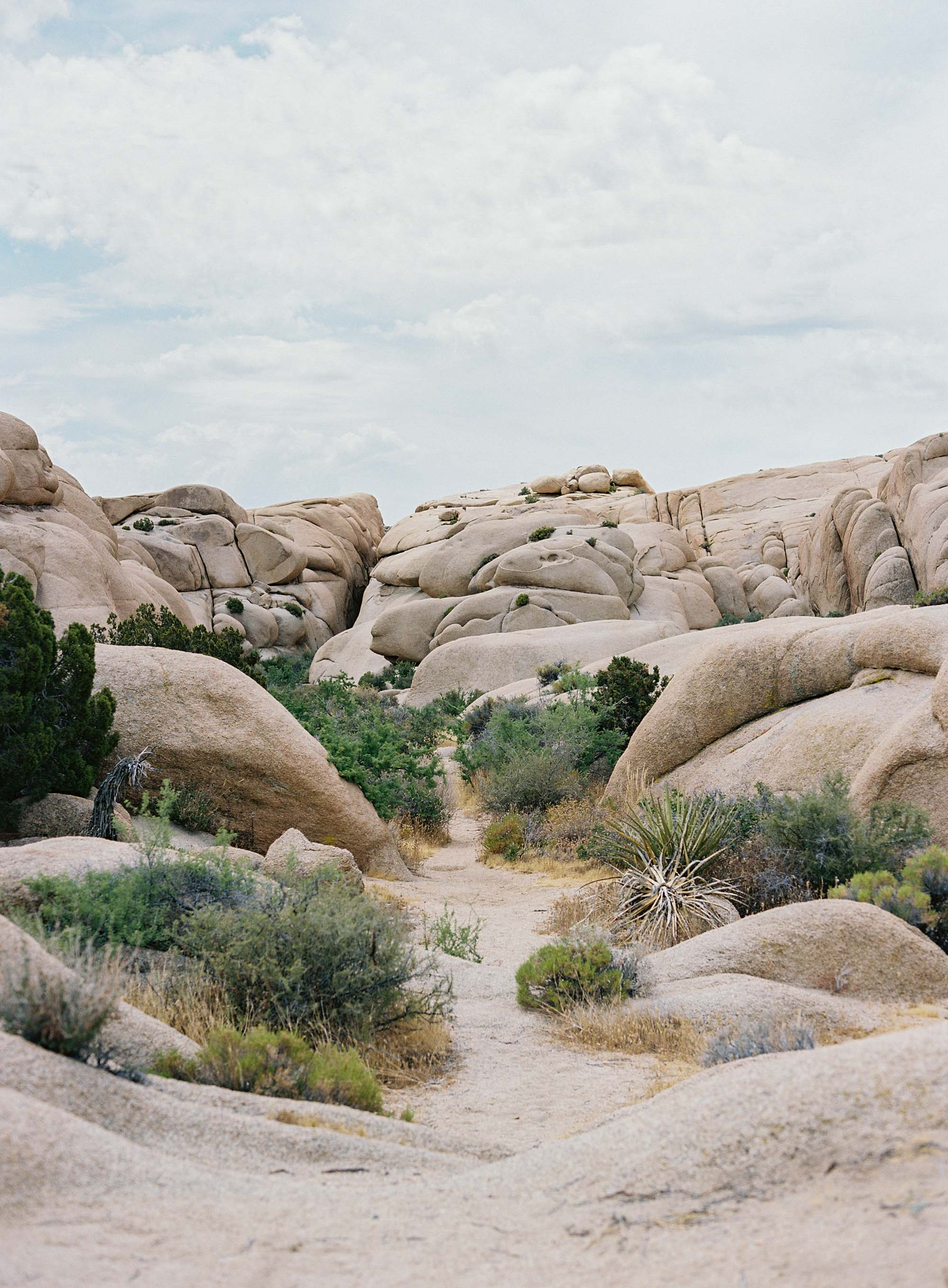 Travels in Joshua Tree | Seattle, California, and Destination Wedding Photographer Anna Peters